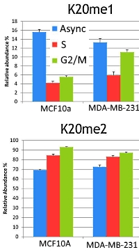 Methylation on Lysine 20