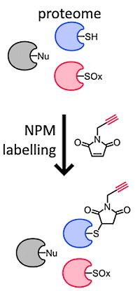 Maleimide-Based Chemical Proteomics for Quantitative Analysis of Cysteine Reactivity