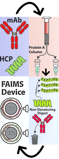 Combination of FAIMS, Protein A Depletion, and Native Digest Conditions Enables Deep Proteomic Profiling of Host Cell Proteins in Monoclonal Antibodies