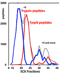 Isolation of acetylated and unmodified protein N-terminal peptides by strong cation exchange chromatographic separation of TrypN-digested peptides