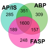 Proteomic Sample Preparation through Extraction by Unspecific Adsorption on Silica Beads for ArgC-like Digestion