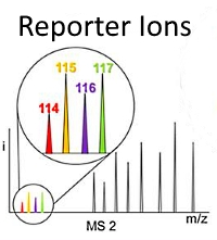 Intact Transition Epitope Mapping - Targeted High-Energy Rupture of Extracted Epitopes (ITEM-THREE)
