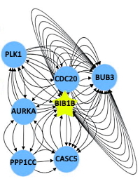 Mapping Proximity Associations of Core Spindle Assembly Checkpoint Proteins